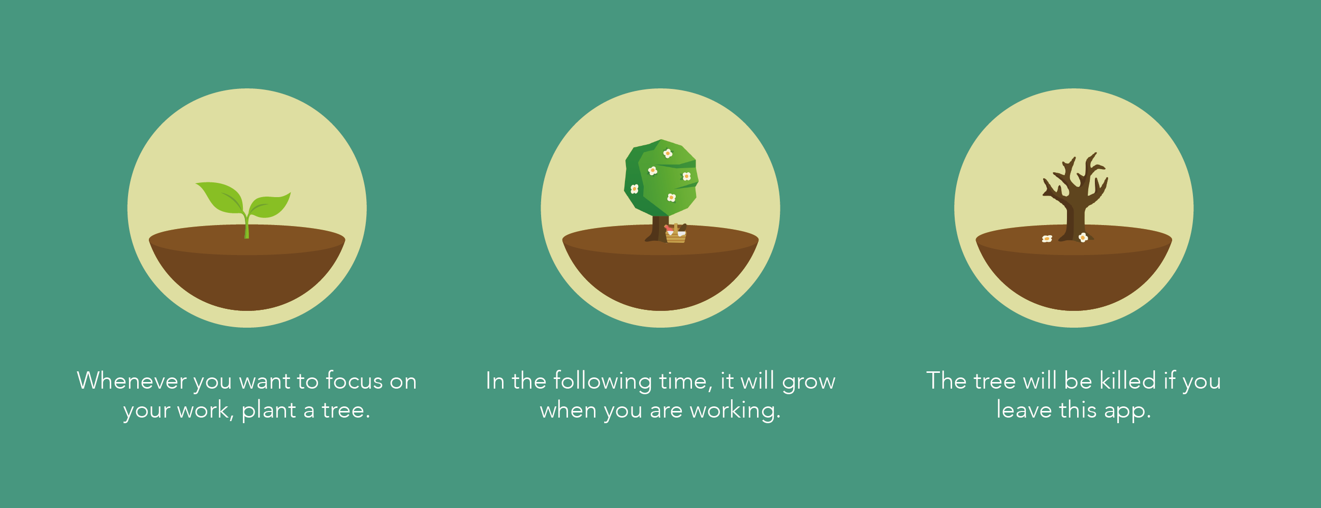 3 images of a small plant, a fully grown tree, and a dying tree.